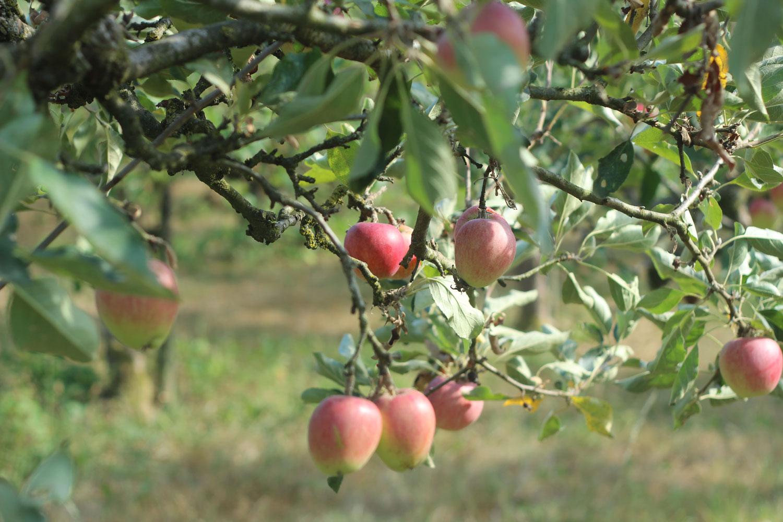 Appelboomgaard-desteenencamer